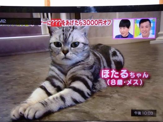 【楽天スーパーSALE】10%OFF【New伊豆で贅沢!】プラン