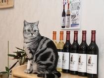 アルプスワインその名も「neko」