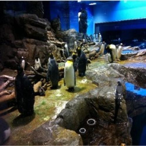 海響館ペンギン村