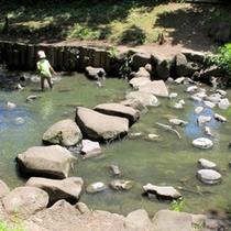 子供の川遊び