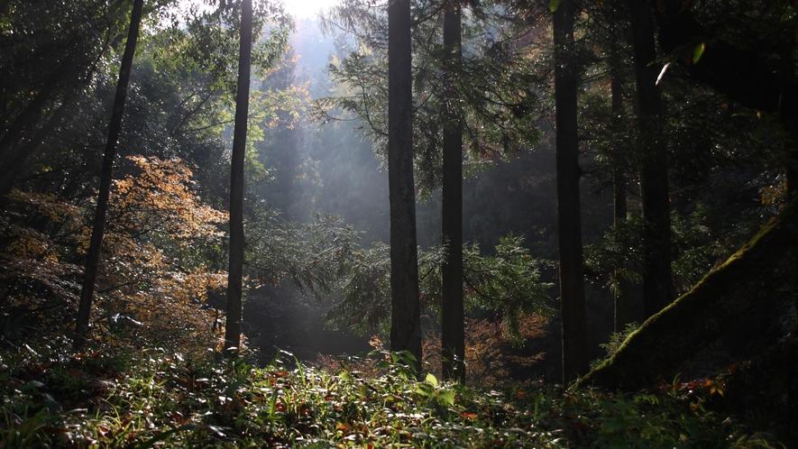 森林のフィトンチッド<森林の精気>でリフレッシュ!