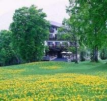 ホテル前に咲くたんぽぽ畑