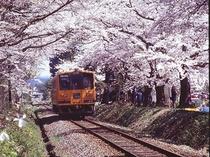 春の芦野公園