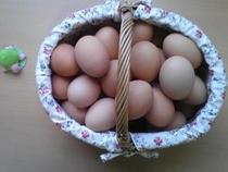 朝食バイキング 日替わりメニュー