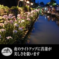 花菖蒲のライトアップ
