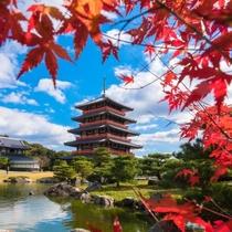 紅葉の見事な蓮華院誕生寺。