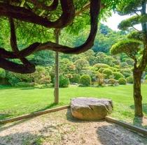 木陰より望む庭園。