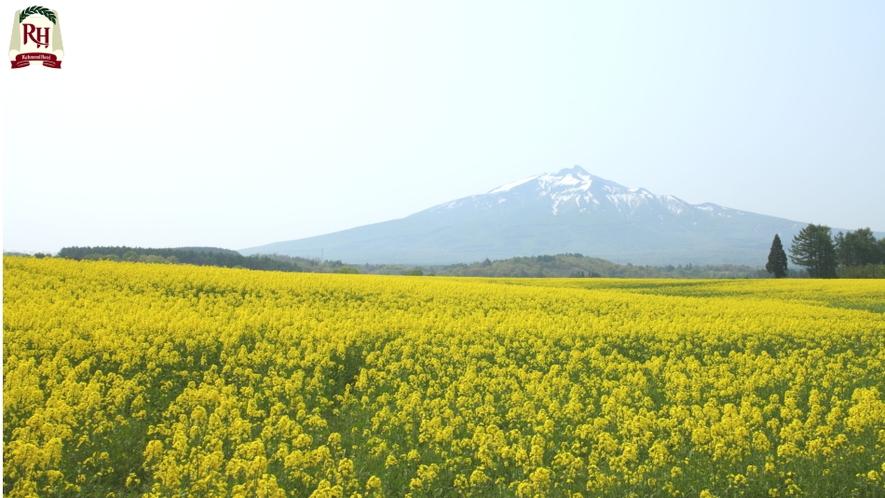 岩木山麓菜の花畑  鯵ヶ沢町