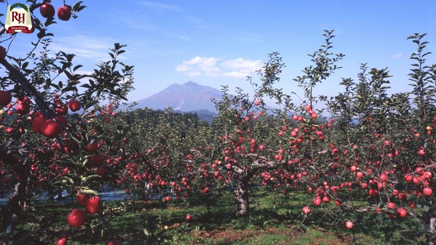 りんごの木 弘前市