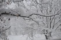 木々に積もる雪