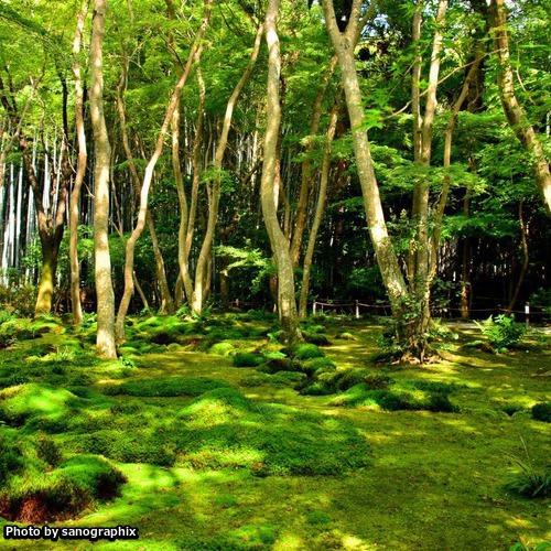嵐山祇王寺の苔 Photo by sanographix