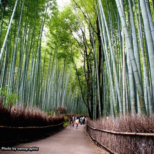 嵐山の竹林 Photo by sanographix