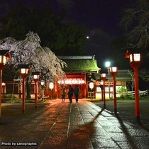 夜の平野神社 Photo by sanographix