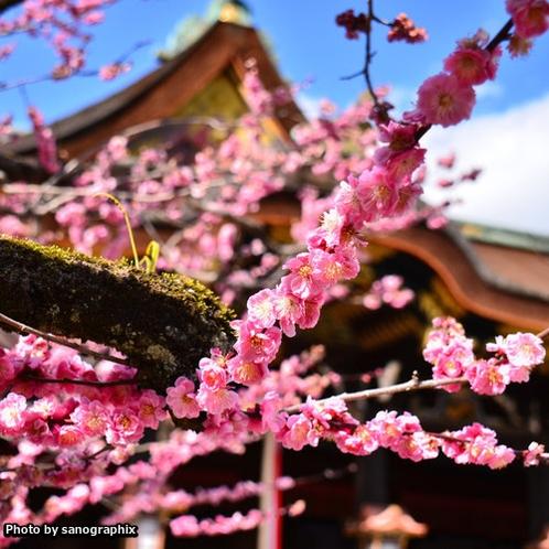 北野天満宮の梅 Photo by sanographix