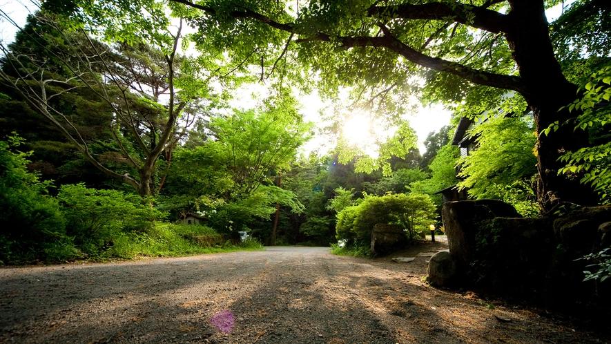 森に佇む隠れ家への入口