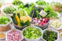 森のレストランMARCHERANT_空土ファームから届く新鮮野菜