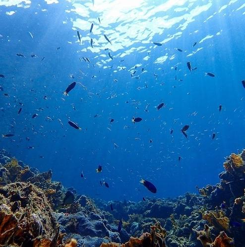 熱帯魚が泳ぐ南伊豆の海