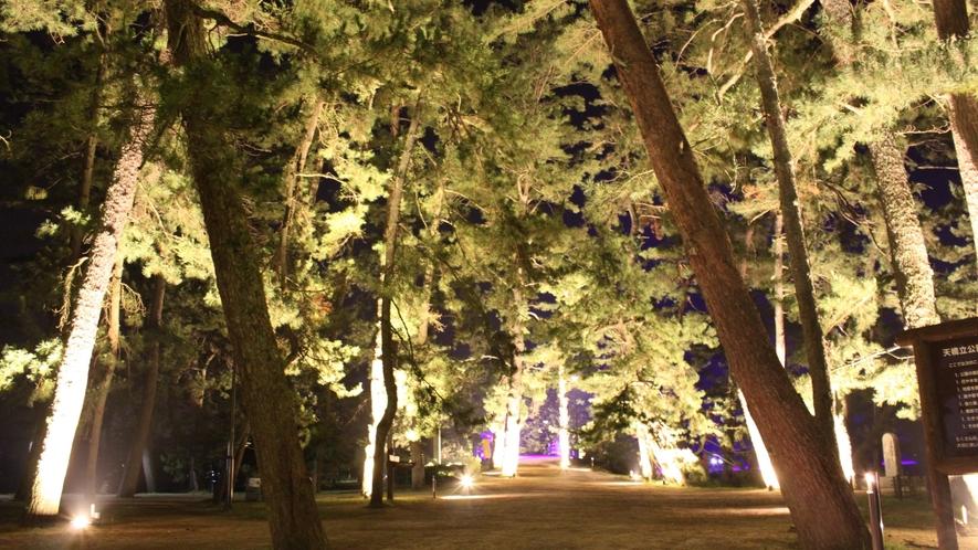 【天橋立まち灯り】松並木ライトアップ