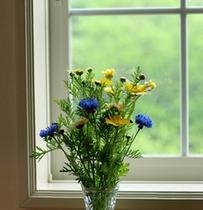 喫煙室に置かれた春菊