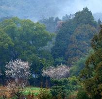春の里山の風景