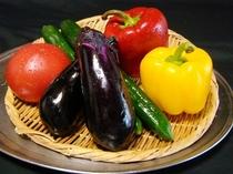 自家農園で採れた新鮮夏野菜