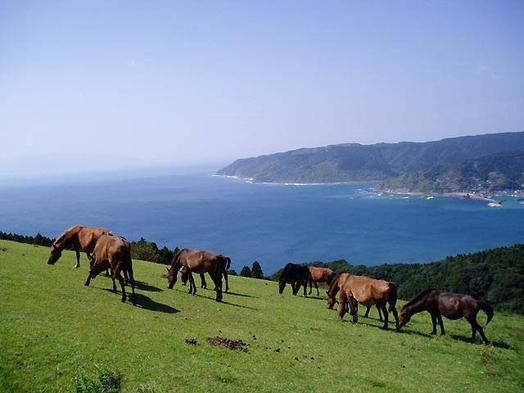 【素泊まり】都井岬に野生馬と満天の星空を見に行こうプラン♪