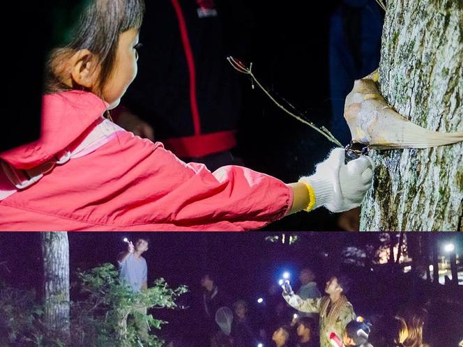 南三陸で昆虫採集体験を!