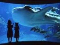 ジンベイザメが有名