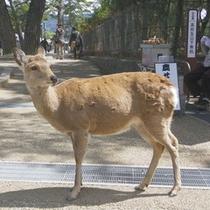 *奈良といえば鹿!かわいい鹿さんに会いに来てください♪