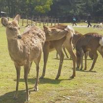*奈良といえば鹿!当館は鹿のいる奈良公園に隣接しております