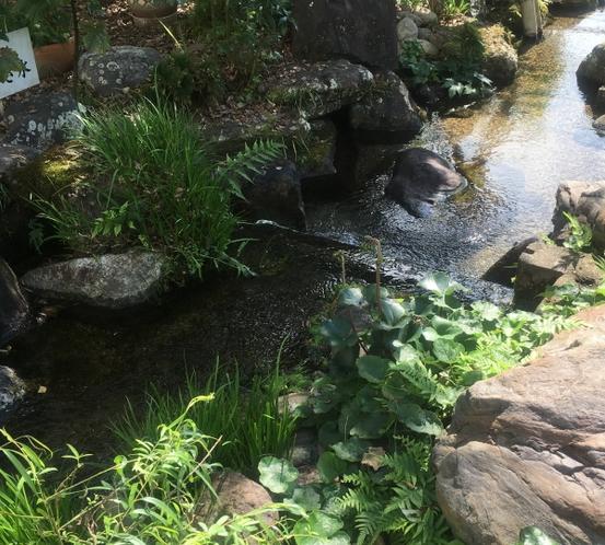 庭園 池スペース