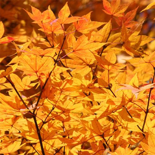 八ヶ岳高原 清里の紅葉