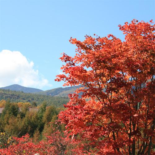 八ヶ岳ブルーの空に映える紅葉