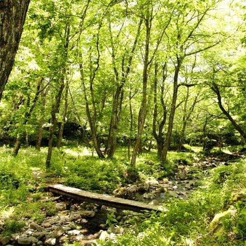 八ヶ岳高原・清里の新緑