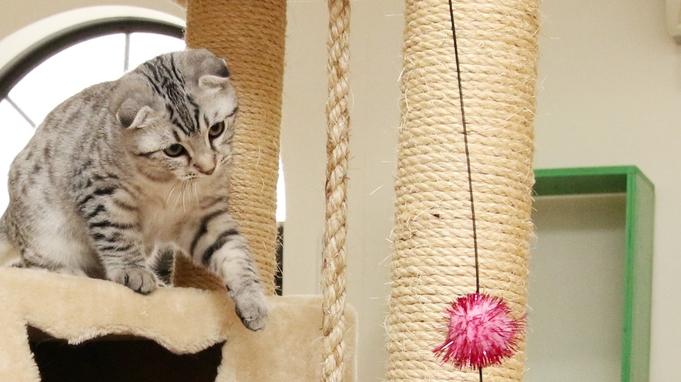 【猫ちゃん専用プラン】部屋食◆安心・安全の旅行をサポート【キャット用具】&【キャットルーム】♪