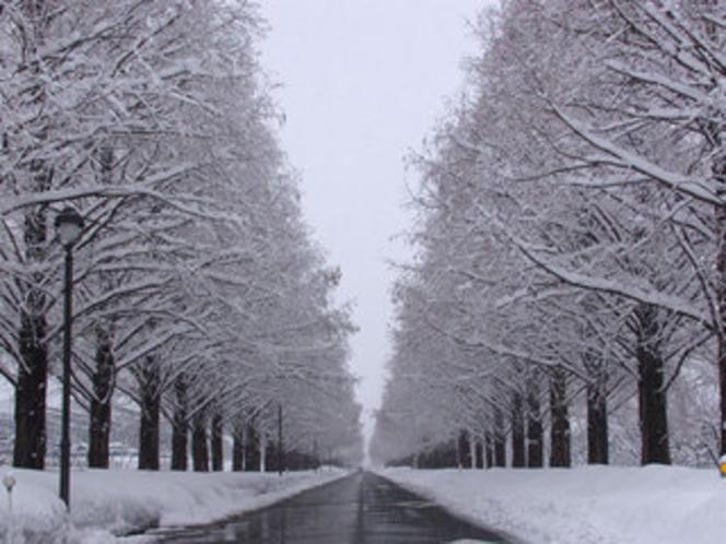 冬のメタセコイヤの並木道