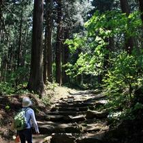 小菅神社【奥社】までの山道