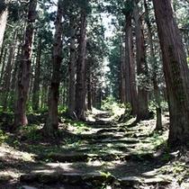 小菅神社【杉並木】