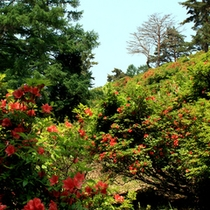 野沢の裏山「つつじ山」!徒歩20分で山頂へ!(見頃は6月上旬)