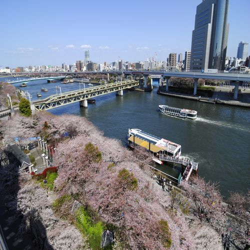 桜の名所隅田公園