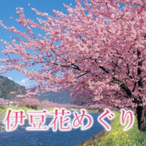 花巡り◆例年12月〜4月までいつでも花巡り&祭り開催中です