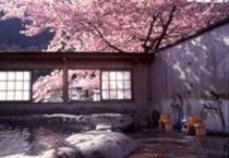 河津桜の露天風呂