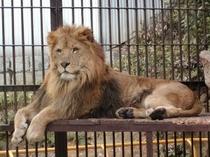 ライオンズ・・・