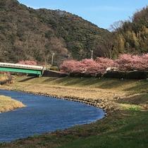 2~3月 みなみの桜と菜の花祭り