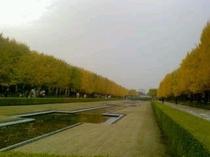 昭和記念公園【秋】