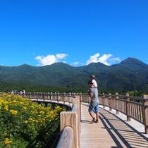 知床五湖は安全で歩きやすい木道があるから親子で楽しめる♪