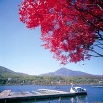 秋の白樺湖1