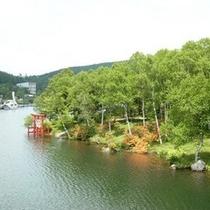 初夏の白樺湖