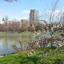 中島公園では桜のシーズンにはお花見も盛んです!