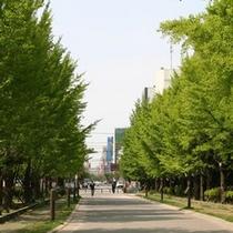 ホテルから徒歩3分の中島公園。都会の中のオアシスです。